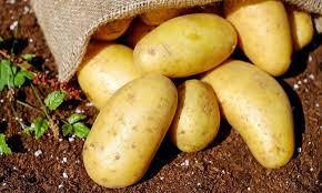 Przed nami Święto Pieczonego Ziemniaka – To Nasz Region