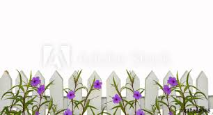 White Picket Fence Border With Purple Flowers Border Isolated On White With Space For Copy Above Will Tile Horizontally Buy This Stock Photo And Explore Similar Images At Adobe Stock
