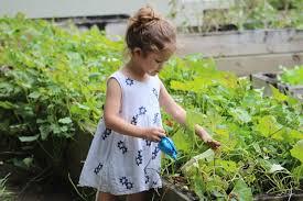 gardening in south florida 5