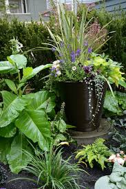 container gardens for shady spots