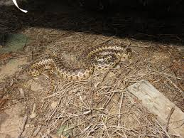 Living With Wild Snakes