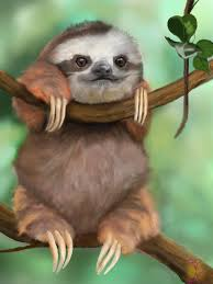baby sloth wallpaper on wallpapersafari