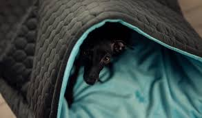 bed for italian greyhound