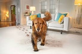 how to get rid of pet odor smell out of