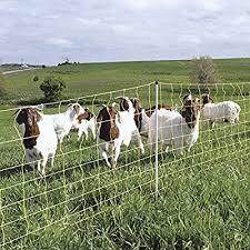 Amazon Com Premier 42 Electric Goat Net Fence 9 42 6 Yellow 164 Roll Industrial Scientific