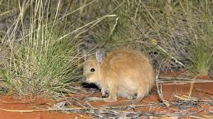Australian Cat Proof Fence Protects Endangered Species Bbc News