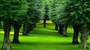 صور اشجار اجمل صور الاشجار كيف