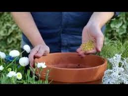 how to plant a patio pot you