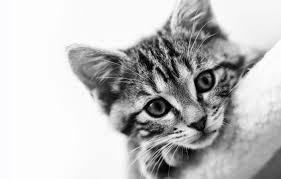 homemade kitten food health home