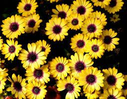 most beautiful sunflower wallpaper in