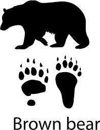 Brown Bear With Paw Print Decal Vinyl Wall Stickers
