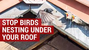 birds from nesting under roof eaves