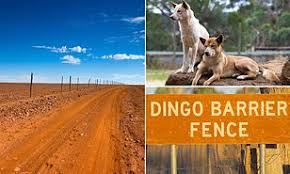 The Dingo Fence Boundary That Stretches For 5 600 Kilometres Across Australia Daily Mail Online
