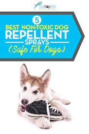 top 5 best dog repellent spray 2017