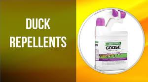 5 Best Duck Repellents To Obtain Online 2020 Youtube