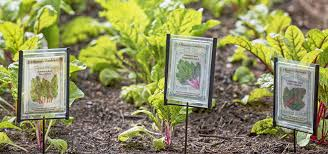 make your own garden markers