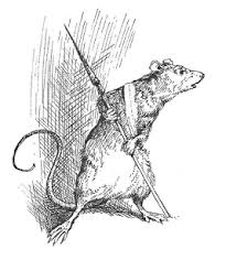 The Bookinistas: NIGHTSHADE CITY by Hilary Wagner (comment and win!) |  Nightshade, Humanoid sketch, Rat 1