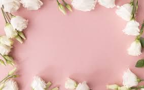 تحميل خلفيات الورود البيضاء الخلفية الوردي زهرة إطار الورود