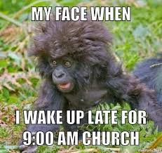 20 funny monkey memes you ll totally