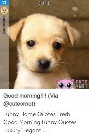 cutie cute ndt good morning via cuteornot funny hoquotes