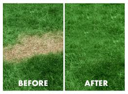 Grotrax Grass Review (2019) - Does it Really Work in Hot Humid South?