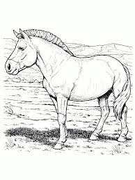 Paarden Kleurplaten Is Mijn Pony Check More At Https Olivinum