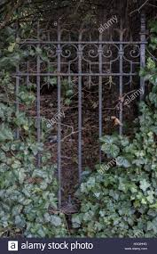 Iron Fence With Creeping Ivy Stock Photo Alamy