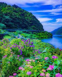 شاهد خلفيات ورد صور خلفيات ورد صور طبيعة مميزة وجميلة وفريدة جدا