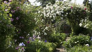 how to grow a rose garden real homes