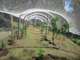 bird netting for fruit trees bird