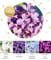 lilac meaning and symbolism ftd com