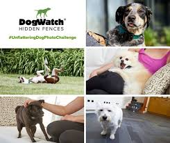 Dogwatch Of Metro Detroit 14355 Barton Drive Washington Mi 2020