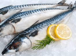 Cá Thu - Nguồn Gốc, đặc điểm Và Công Dụng Tuyệt Với đối Với Sức Khỏe Con  Người - Báo Khuyến Nông