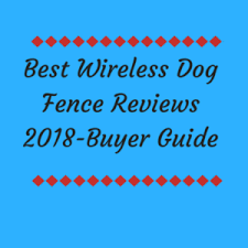 Best Wireless Dog Fence Invisible Electric Reviews In 2020