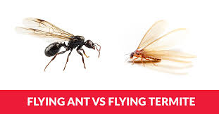 View What's The Difference Between A Termite And A Flying Ant  Images
