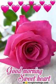 15 beautiful morning wishes with rose