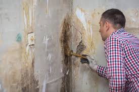 Mold Removal & Remediation | Mold | New Orleans Restoration ...
