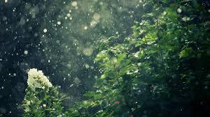 beautiful rain 1920x1200 wallpaper