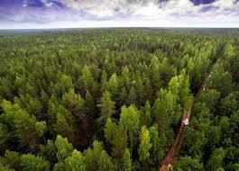 Бізнес Луганщини сплатив майже 31 млн грн екологічного податку