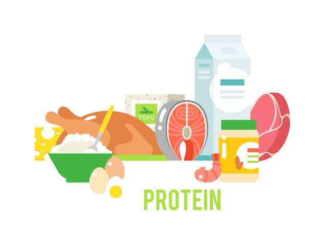 """「proteinの働き」の画像検索結果"""""""