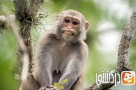 معلومات طريفة عن القرد