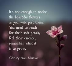 nature quotes appreciation poems quote flowers gratitude