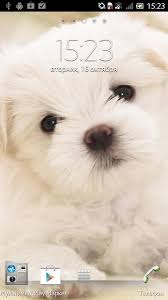 puppy dog live wallpaper android apps