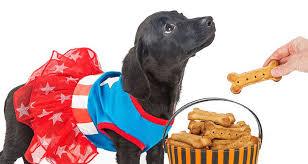 homemade dog food dog treats