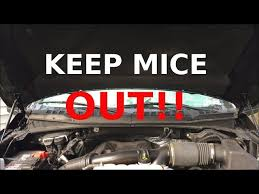 Keeping Mice Out Of A Car Or Truck Youtube