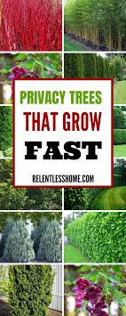 Top 10 Beautiful Plants You Can Grow Instead Of A Fence Fence Plants Plants Fast Growing Plants
