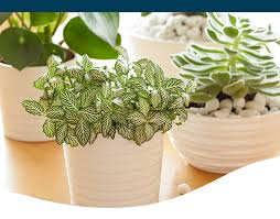 15 non toxic houseplants that are safe