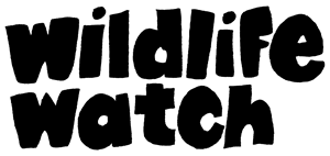 Braunstone Wildlife Watch Group – Fire Lighting & Cooking ...