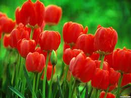 خلفيات لاب توب ورود صور متميزة لزهور مذهلة صوري