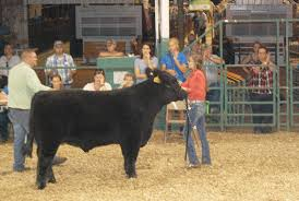 Hillary Hamilton, Lawton Parry win County Bred and Born Steer competition -  The Highland County Press